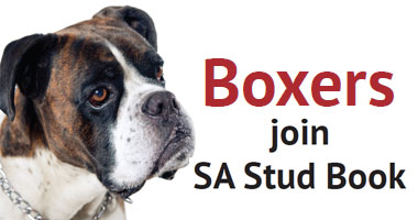 Boxers Join SA Stud Book