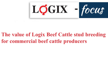 The value of Logix Beef Cattle stud breeding