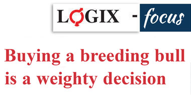 Buying a breeding bull is a weighty decision