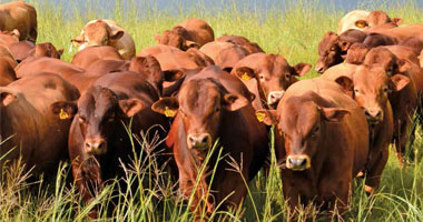 Technology – a resource to drive profit in beef operations